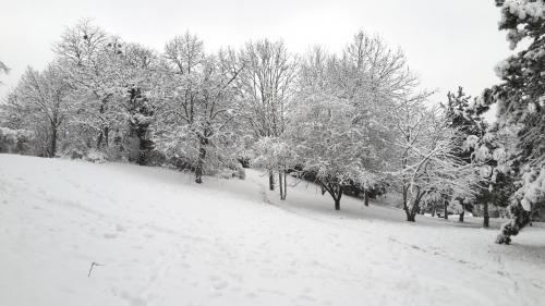 neige-02-2018_2.jpg