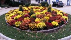 fontenay-aux-roses,chrysanthèmes,offrir,fleurs,ville
