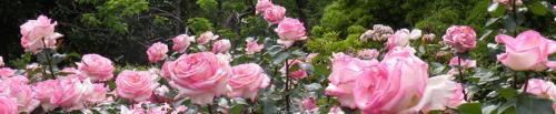 environnement,espaces verts,jean-françois dumas,fontenay-aux-roses,herbicides,phytosanitaire