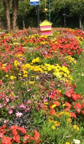 fontenay-au-roses,fleurs,fleurissement,roses,espaces verts,jardiniers,mairie,rue